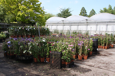Jan van Zoest nursery