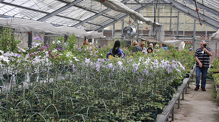 Gl Houses At The Sugimoto Nursery