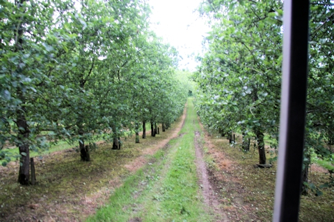 Some of the Orchards©Ken Woolfenden